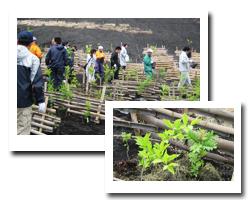 富士山植樹活動報告