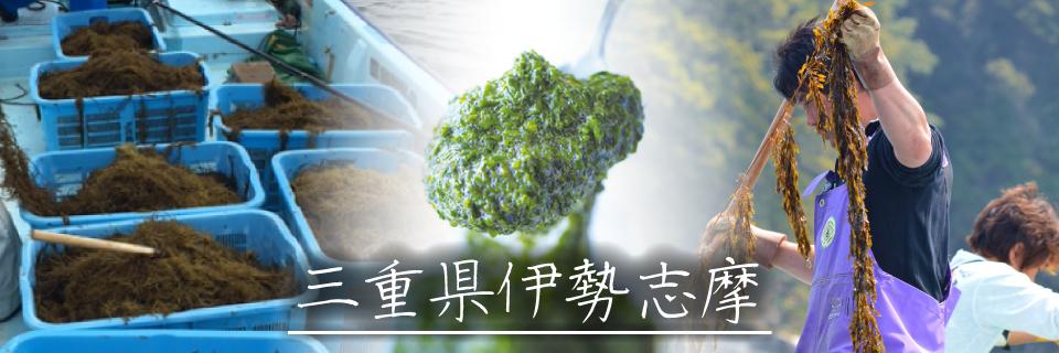 ふるさと応援団マルシェ 三重県伊勢志摩の取組み 若手漁業者の皆様が「あかもく」を採取・加工・販売して特産品に
