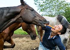 大切に育てられている馬たち