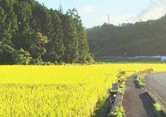 三原村田園風景