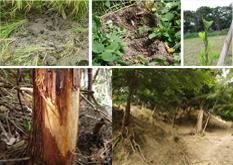 津島市の生態系被害